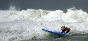 dog on surf board
